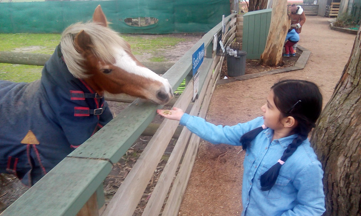 Little Gypsy Feeding a Horse at Maru Adventure Park, Melbourne