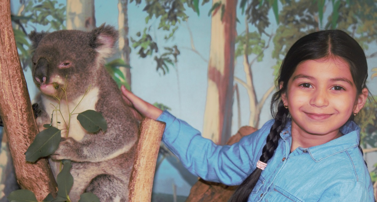 Koalas at Maru Adventure Park, Melbourne