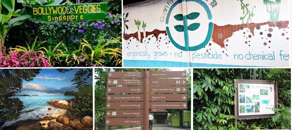 Beautiful Gardens in Singapore