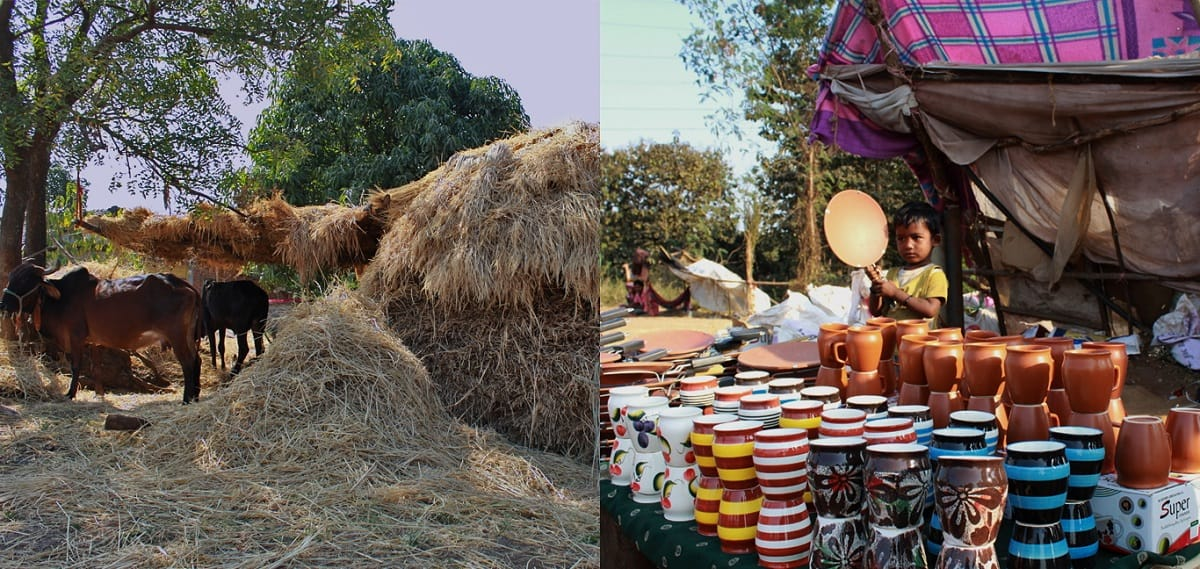Rural Beauty in Shirdi
